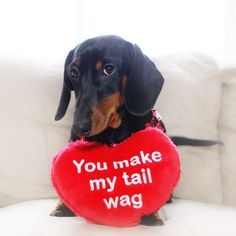 You make my tail wag dachshund, doxie