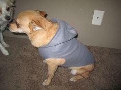 Video Tutorial for making a Dog Fleece Hoodie.  I love how this pup cooperates!! <3
