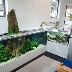 Feeding time 2000 liter plus 5000 liter tanks Foll Diy Aquarium, Aquarium Driftwood, Aquarium Design, Aquarium Fish Tank, Fish Tank Design, Amazing Aquariums, Aquarium Landscape, Betta Fish Tank, Monterey Bay Aquarium