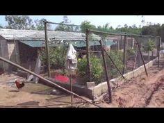 kỹ thuật xây dựng chuồng nuôi bồ câu pháp dạng quần thể - bồ câu hà tĩnh
