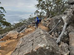 The 5 best walks on kunanyi / Mount Wellington Hobart Bruny Island, Silver Falls, Largest Waterfall, Unique Plants, Old Farm, Stunning View, Tasmania, Walking Tour, Walk On
