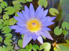 Free Jigsaw Puzzles Online - WATER LILY  #JigsawPuzzles #JigsawPuzzle #Puzzle