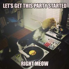Two turntables; Cats scratching vinyl.