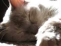 Sleeping cat photography  Fine Art by MoonLightDrivePrints on Etsy, $20.00