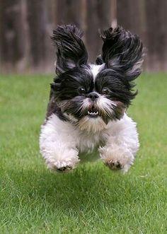 """Dog- """"AAAaaaaahhhh!"""""""