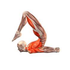 Locust pose with legs bent - Salambhasana with legs bent - Yoga Poses   YOGA.com