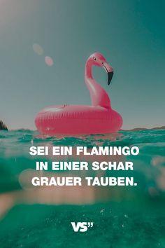 Visual Statements®️️️️ Sprüche/ Zitate/ Quotes/ Motivation/ Sei ein Flamingo in einer Schar grauer Tauben.
