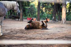 Rancheros close encounters with animals © Sonia Farasopoulou Close Encounters, Ranch, Horses, Animals, Guest Ranch, Animales, Animaux, Horse, Animal Memes