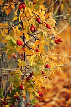 Autumn bittersweet days.