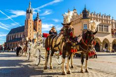 Horse carriages at main square in Krakow in a summer day, Poland , Learn Polish, P&o Cruises, Singles Holidays, Norwegian Cruise Line, Celebrity Cruises, Horse Carriage, Disney Cruise Line, European History, Travel Around The World