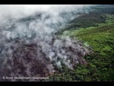 Stop Rainforest Destruction | Greenpeace New Zealand