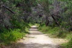 Mosquito Lane near St Leonards Saints, Country Roads, Explore, Photos, Pictures, Exploring