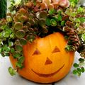 Fall Container Gardening Ideas and Advice: Pumpkin Planters