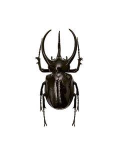 Poster mit Insekt, Insektenposter für die Inneneinrichtung | desenio.com