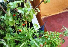 Gabriela Pastro Vamos falar a verdade, quando você ouve falar em bichos na horta você pensa o quê? Que eles vão fazer bem para seu jardim ou que sãopragas que irãose espalhar por tudo e devorar s…