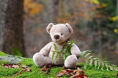 Teddy Bear, Bear, Children Toys