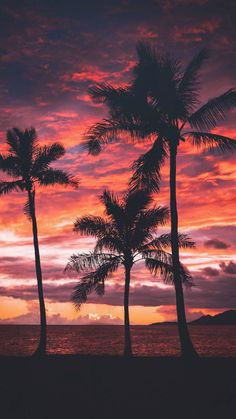 New Palm Tree Sunset Wallpaper Sun Ideas Tree Sunset Wallpaper, Beach Wallpaper, Nature Wallpaper, Paradise Wallpaper, Mobile Wallpaper, Tumblr Wallpaper, Wallpaper Backgrounds, Iphone Backgrounds, Wallpaper Quotes