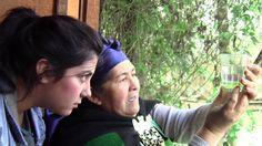 Curanderos mapuches y médicos trabajarán juntos en un hospital