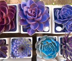 Do It Yourself Weddings: Blue and Purple Succulents For Your Wedding- Spray paint them to match your wedding colors! Such a great idea! Sooo doing this for my wedding! DIY and cheap ^_^ (spray paint flowers mom) Cactus Planta, Cactus Y Suculentas, Purple Succulents, Planting Succulents, Succulents Diy, Succulent Favors, Succulent Plants, Echeveria, Flower Power