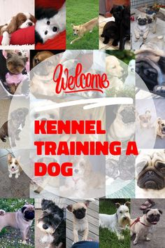 Kennel Training A Dog Tips You Can Benefit From Knowing * More details can be found by clicking on the image. Kennel Training A Dog, Crate Training, Dog Training Tips, Stress And Anxiety, Benefit, Have Fun, Image Link, Advice, Puppies