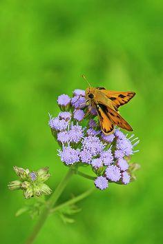 Featured on Groovy Butterflies! http://fineartamerica.com/groups/groovy-butterflies.html