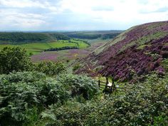 Hole of Horcum, North Yorkshire England Ripon Yorkshire, Yorkshire England, North Yorkshire, Beautiful Islands, Beautiful Places, Places To Visit Uk, Little England, Scenery Pictures, Wales