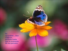 Large_Ringlet_-_forest_clearings_and_damp_meadows_butterfly - Desktop Nexus Wallpapers Butterfly Poems, Butterfly Kisses, Blue Butterfly, Butterfly Bush, Butterfly Pictures, Flower Pictures, Henry Ford, Butterfly Species, Georgia Aquarium