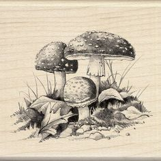 Inkadinkado Wood Stamp, Mushrooms Inkadinkado,http://www.amazon.com/dp/B008E59DZQ/ref=cm_sw_r_pi_dp_9LX2sb1MZ4GHTRH6
