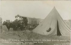 168 - Ezra Meekers Ox Team at Camp in Seattle