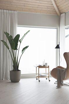Green plant love | Stylizimo