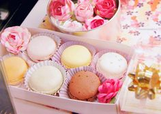 macarons pastel wallpaper - Buscar con Google