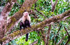 Santa Rosa National Park Guide: Where To Go & What To See Costa Rica Travel, Vacation Trips, Where To Go, National Parks, State Parks