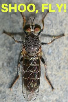 Learn how to get rid of flies in your home.