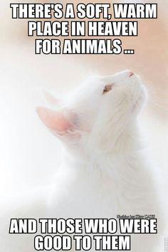 =^. .^= Cat Quotes =^. .^=