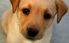 Gli alimenti da non somministrare mai al tuo cane #alimentazione #cane