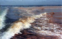 Alghe tossiche e caldo: scatta il divieto di balneazione