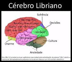 O Cérebro Libriano
