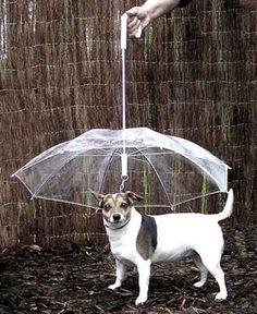 If you're tired of walking your dog in the rain and returning home with your dog dripping wet, then you need a Dog Umbrella. The Dog Umbrella is a see through umbrella that also works as a leash, keeping your dog in your control and out of the rain. Pet Dogs, Dogs And Puppies, Pet Puppy, Pet Pet, Dog Umbrella, Umbrella Holder, Dachshund Funny, Fu Dog, Dog Hacks