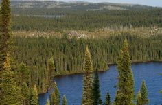 Boreal Forest of Canada: Why to Visit? Taiga Fauna, Fun Facts About Canada, Canadian Forest, Forest Ecosystem, Northern Canada, Ecology, Land Scape, Habitats, Haha