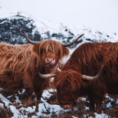 Two of the friendly folks I met last week. Highland cows are usually pretty happy to pose for a picture.