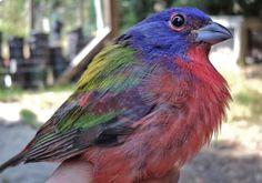 Conservation for Rare North Carolina Wildlife - North Carolina ...
