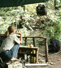 The Jane Goodall Institute - Save the Chimpanzee.