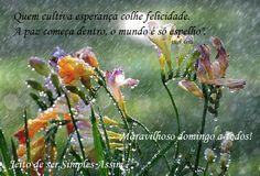 """Quem cultiva esperança colhe felicidade.  A paz começa dentro, o mundo é só espelho"""".  Vitor Ávila Maravilhoso domingo a todos!"""