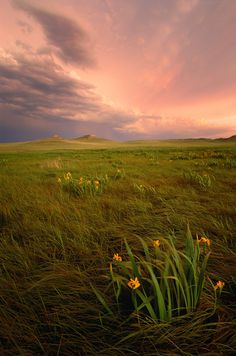 This is the Nebraska I love!  Yellow irises at Agate Fossil Beds National Monument, Nebraska - by Michael Forsberg Nebraska, Yellowstone National Park, National Parks, Beautiful World, Beautiful Places, Belleza Natural, Land Scape, Champs, Wonders Of The World