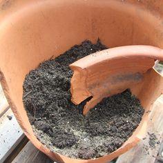 Potting soil holds a section of broken pot rim as a divider in a miniature garden scene. - Photo © 2012 Lesley Shepherd