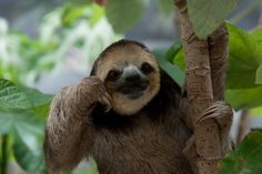 """""""Just imagine sitting here, drinking a coffee, while a sloth does this."""""""