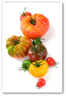 Brandywine Tomato, Best Planting Tomatoes, Growing Brandywine Heirloom Tomatoes