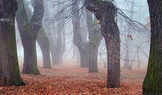 Mystic avenue.. by Ondřej Jirků, via 500px