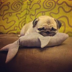 Too cute...how I feel on Mondays! Lol