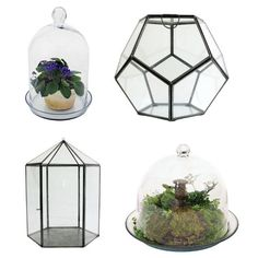 Selection of Terrariums from Lamps Plus